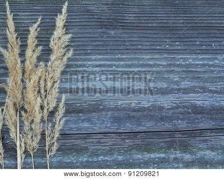 Board With Autumn Grass