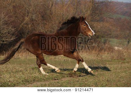 Nice Pony Running
