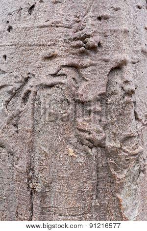 Baobab Texture