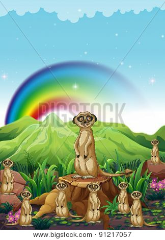 Group of meerkats stand guard in the field