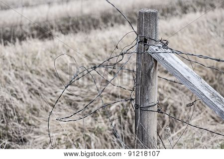 Tangled Barbed Wire Fence