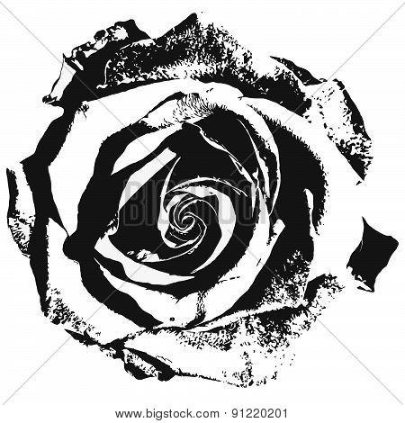 Stylized rose siluette