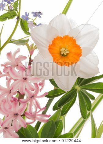 Beautiful Narcissus