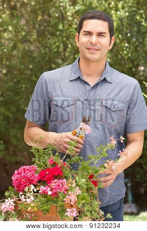 Hispanic Man Working In Garden Tidying Pots