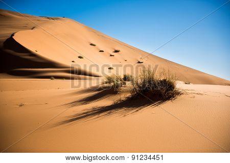 Sand Dunes Of The Sahara Desert