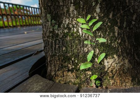 Green Plants Growing At The Base Of  Tree