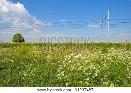Railroad through a sunny landscape in spring