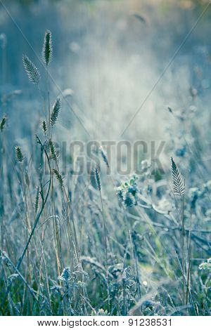 Meadow Illuminated Soft Sunlight. Grass Covered With Fine Frost.