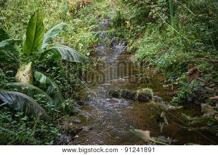 Stream In Woodland