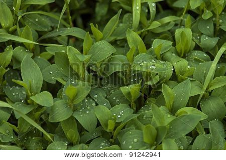 Green plant foliage after rain