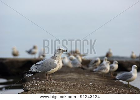 Gull Party