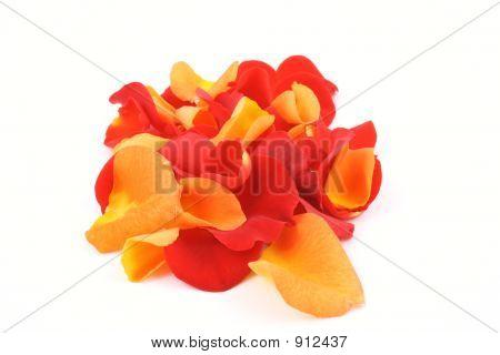 Red And Orange Rose Petals