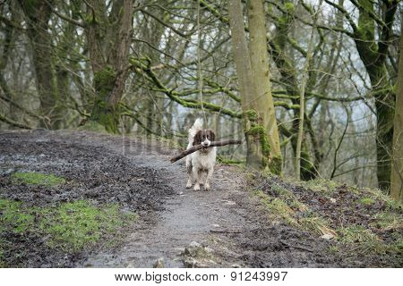 Dog Carrying A Stick