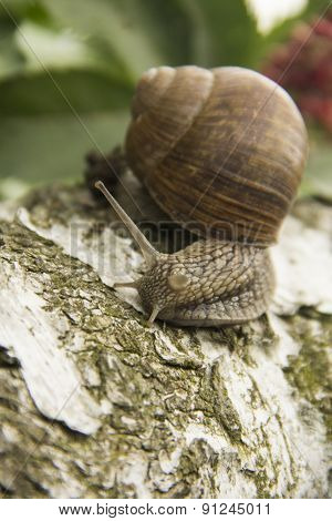 Little Snail Crawling On A Tree On A Green Background
