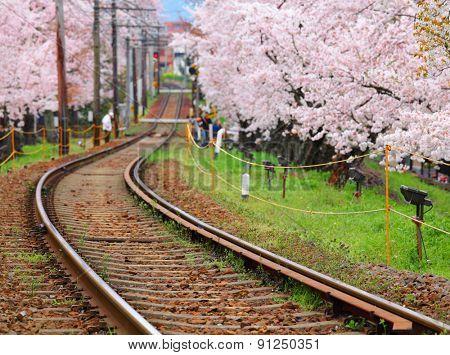 Railway and sakura tree