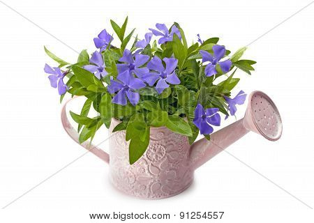 Watering Pot With Spring Flowers