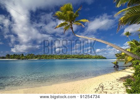 Palm tree over lagoon on One Foot Island, Aitutaki,The Cook Islands