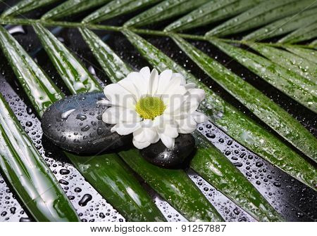 flower with stones and leaf