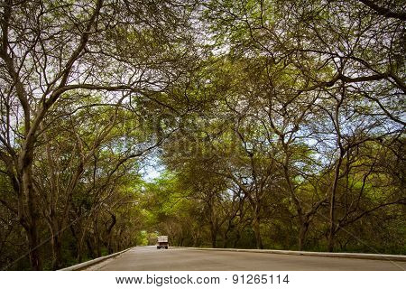 Relaxing view of a coastal road surrounded by bending trees in Manabi.