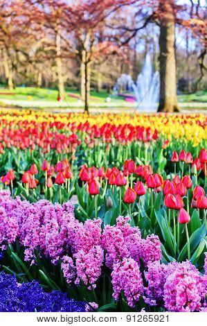 Spring Landscape With Hyacinths And Multicolor Tulips