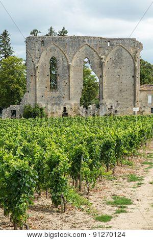 The Vines of St. Emilion