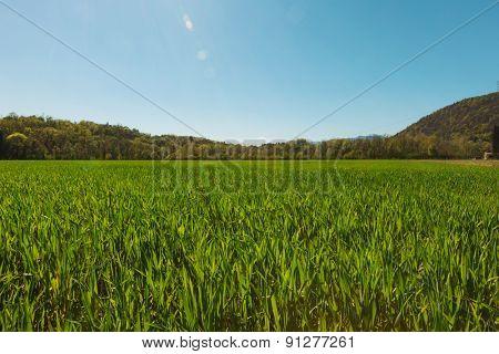 Landscape, green grass