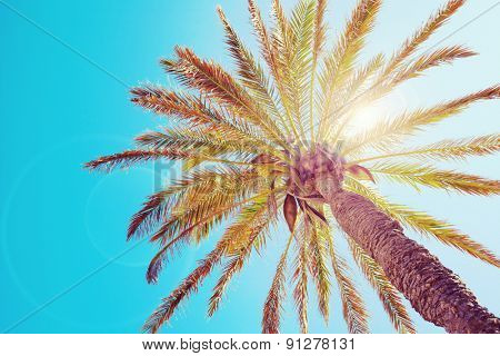Tropical palm tree with sun flares