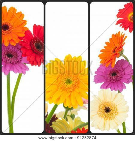 Collage of daisy flowers