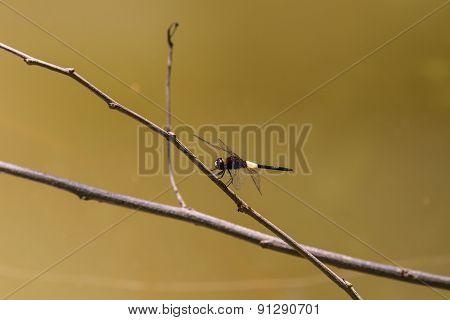 Dragonfly on branch