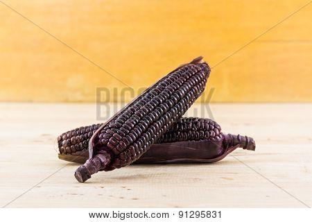 Fresh Purple Organic Corn, Maize .