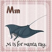 foto of manta ray  - Flashcard alphabet M is for manta ray - JPG