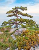 stock photo of crimea  - Rocky beach of Crimea with pinetrees over the sea - JPG