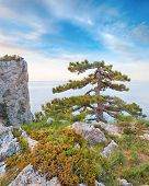 foto of crimea  - Rocky beach of Crimea with pinetrees over the sea - JPG