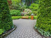 picture of vegetation  - Garden bench surrounded by lush spring vegetation - JPG
