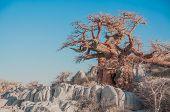 stock photo of baobab  - A baobab tree stands among the granite boulders of Kibo Island in the Makgadikgadi Salt pan of Botswana - JPG