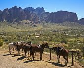 foto of superstition mountains  - A Line of Horses Wait While Tethered at a Hitching Post with the Superstition Mountains in the Background - JPG