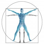 stock photo of male body anatomy  - Vitruvian human or man as a concept - JPG