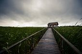 image of trough  - Wooden path trough the reed outdoors at summer - JPG