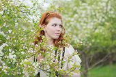 stock photo of orchard  - lovely red - JPG