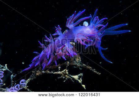 Purple Invertebrate