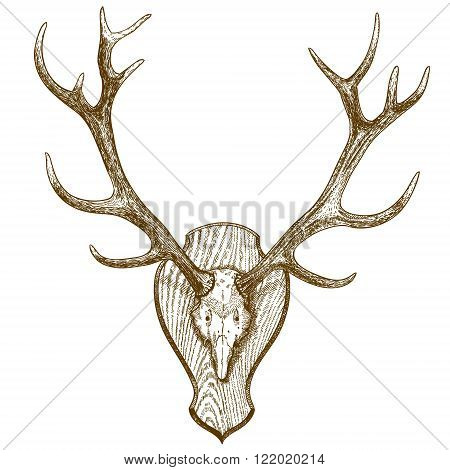 Vector engraving illustration of animal skull with horns isolated on white background