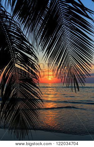 Tropical sunset over palm tree at the khlong Chao beach in Ko Kood island, Thailand