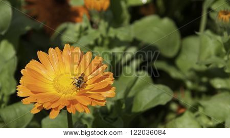 An orange flower with a bee at the Dallas Arboretum