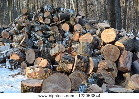 pile of wood felled in winter birch forest