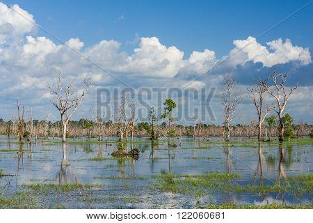 Natural Marshland Vegetation