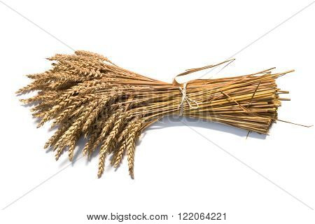 sheaf of wheat on the white background