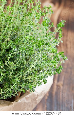 Lemon thyme plant in a paper bag on wooden background. Shallow dof