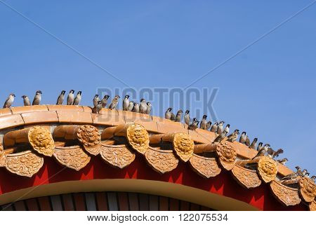 A row of sparrows perching on Chinese-style eaves