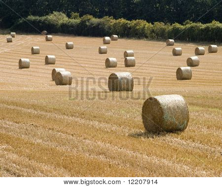 Bails of straw on Yorkshire farmland