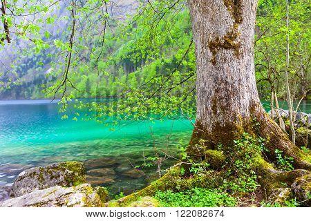 Bavarian nature - beautiful turquoise lake Konigsee